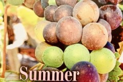 Summer-in-Vineyards-Cover